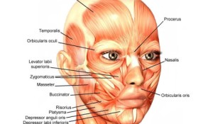 face-muscles-desired-face-european-facial-wourkout-480x280